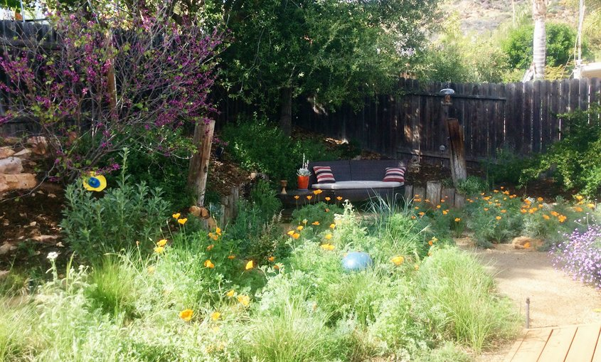 The new garden provides habitat for native insects, birds, animals, and people too. Photo: City of Escondido native plants
