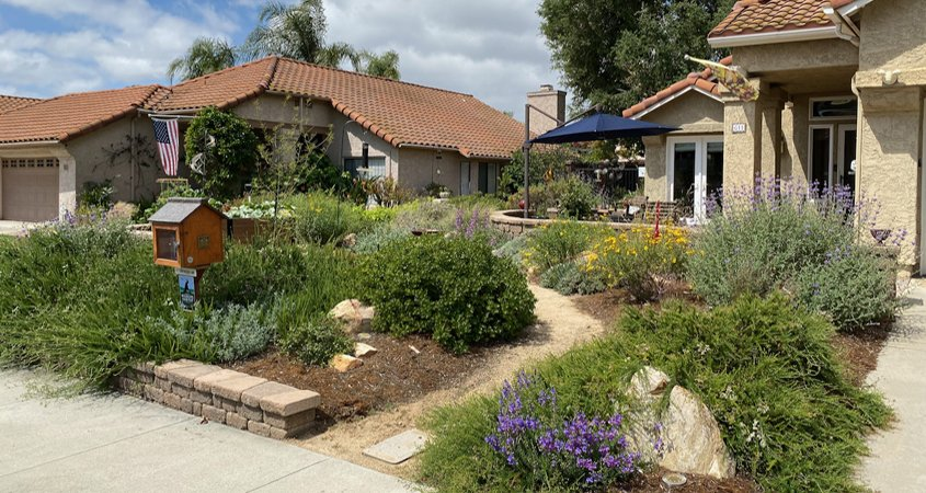 Native plants-drought-City of Escondido-Landscape Makeover
