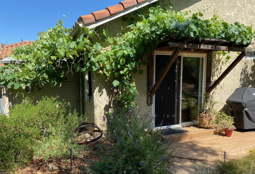 The Everetts' landscaping shows it's possible to have a lush yard and still be waterwise. Photo: City of Escondido native plants