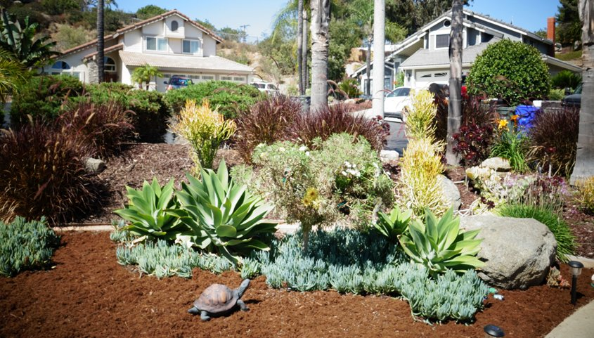 The new landscape now includes a drip-irrigation system, rotating nozzles, and a smart irrigation controller to schedule efficient water use. Photo: Otay Water District