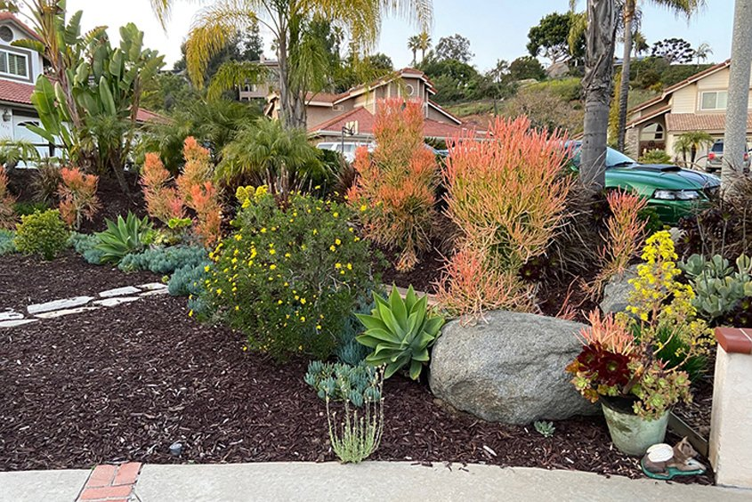 The new landscaping eplaced turf with waterwise plants. Photo: Otay Water District El Cajon homeowner