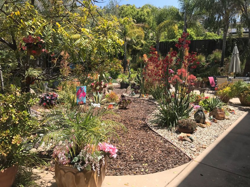 The Brandt home with its new drought-tolerant landscaping. Photo: Vista Irrigation District Vista 2021 Contest