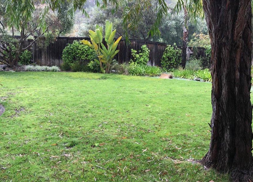 Deborah Brandt's landscaping before its makeover. Photo: Vista Irrigation District Vista 2021 Contest