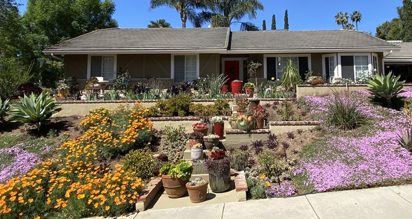 Lauren Grey's new landscaping filled with vibrant blooming plants is the 2021 Vista Irrigation District Landscape Makeover Contest winner. Photo: Vista Irrigation District Vista 2021 Contest
