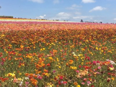 Crop Report-Cut Flowers-Ed Joyce photo-agriculture-San Diego County-Top crops