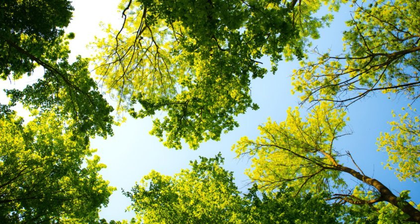 Healthy trees provide tremendous environmental and community benefits, and require a minimal investment in water to stay healthy. Photo: Valiphotos / Pexels tree care tips